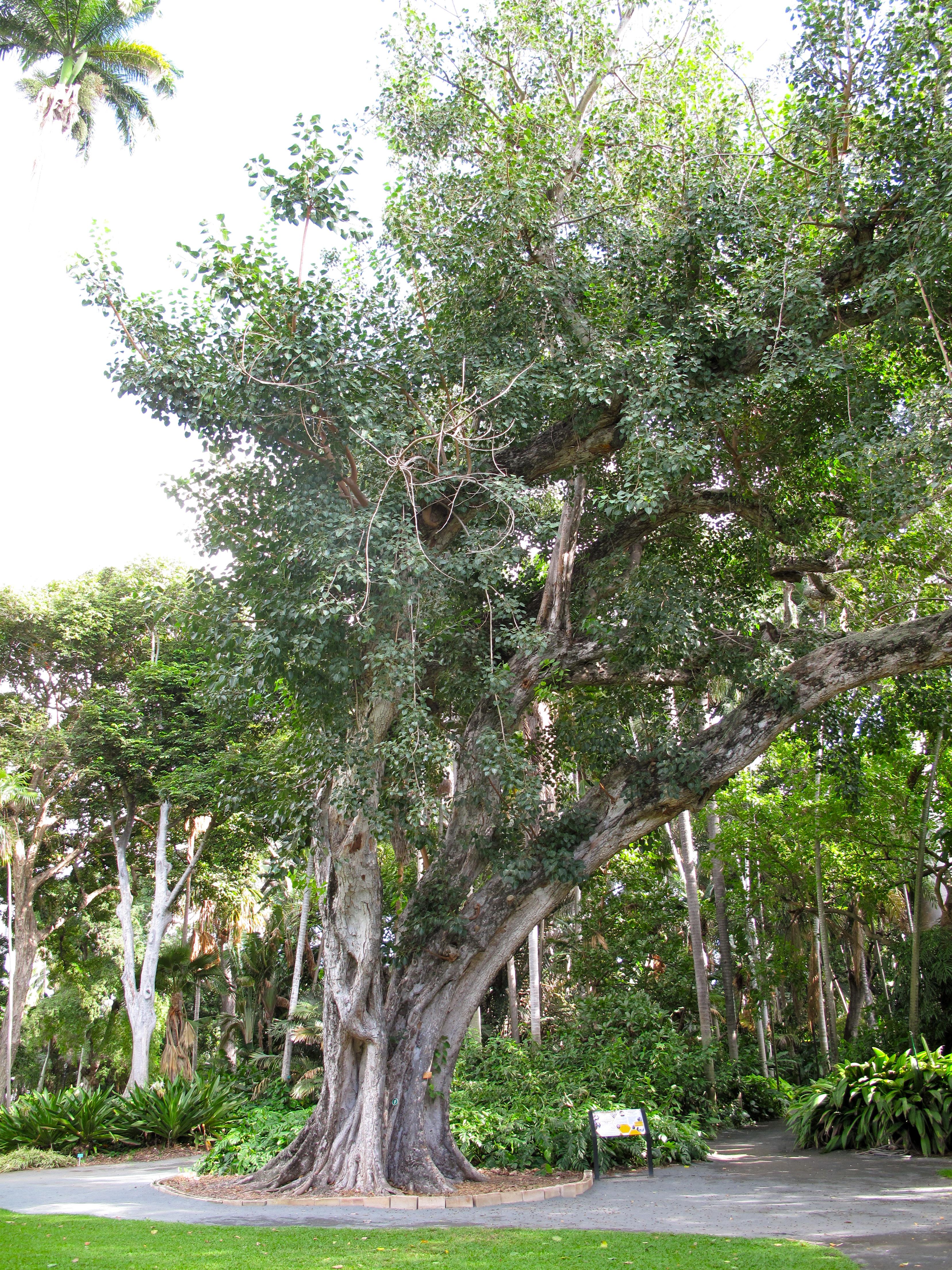 My 36 hours in honolulu garrett on the road for Foster botanical garden honolulu