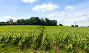 Champagne region: Worth fighting for?